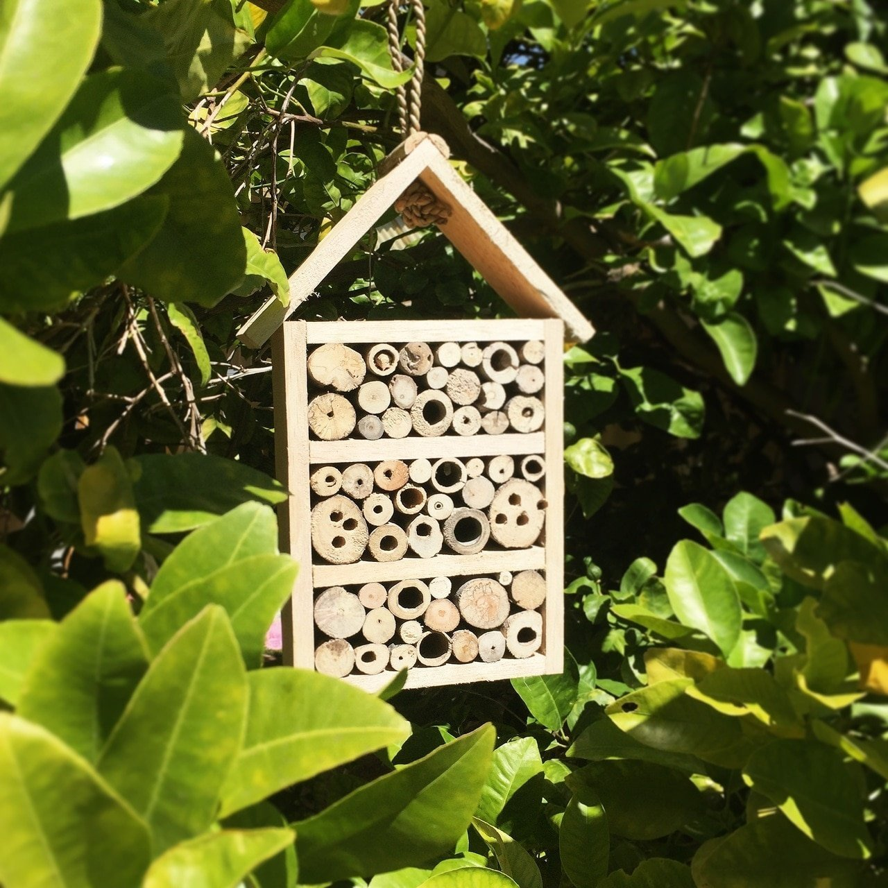 Bee/Insect Hotel
