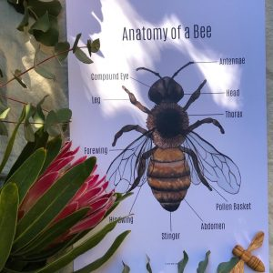 The Honey Bee - Digital Download